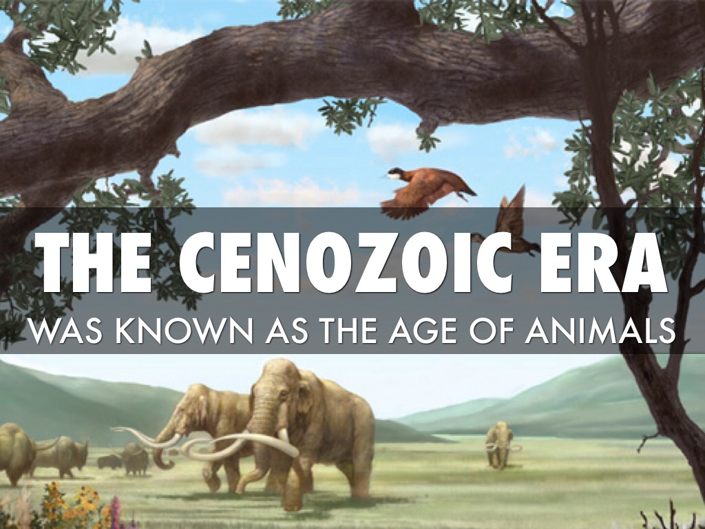 Cenozoic era: periods, climate. Life in the Cenozoic Era 56