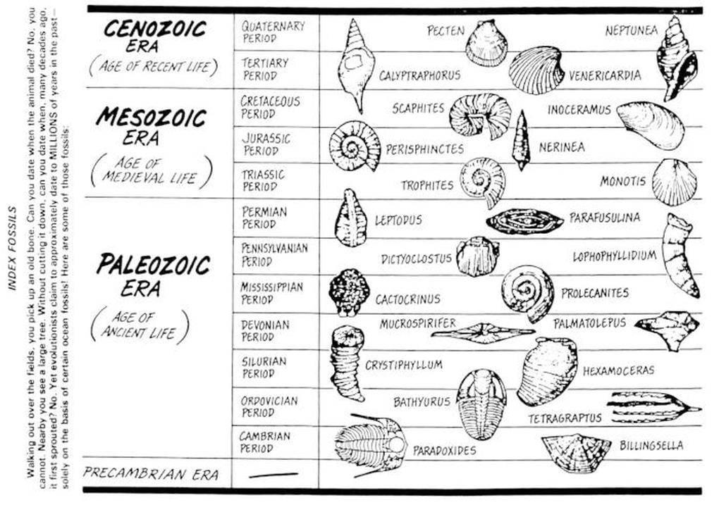 Law of Superposition Index Fossils 8th Grade Science – Fossil Worksheet